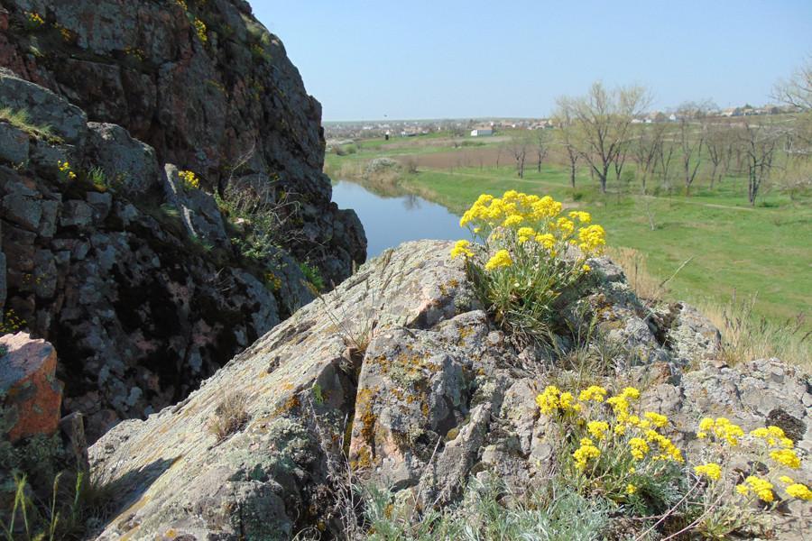 Экологи рассказали об охране в ДНР растения, которое растет в Донбассе миллионы лет